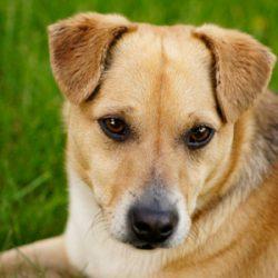 Szczepienie psów w Porębie