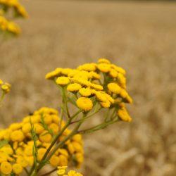 Prawidłowe i bezpiecznie stosowanie środków ochrony roślin
